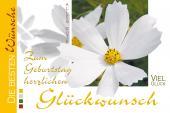 Weiße Blüte auf querformatiger Glückwunschkarte
